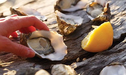 Coral-Expeditions-tasmania-bruny-island-oysters
