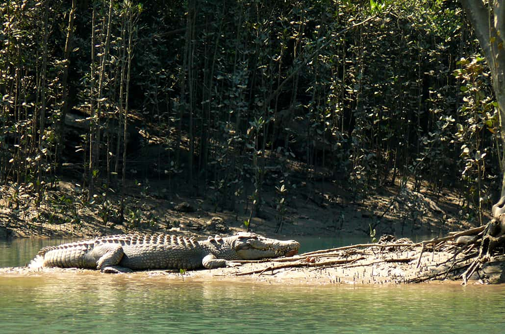 Kimberley Coral Expeditions Crocodile