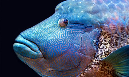 Iconic Species Of The Great Barrier Reef TH