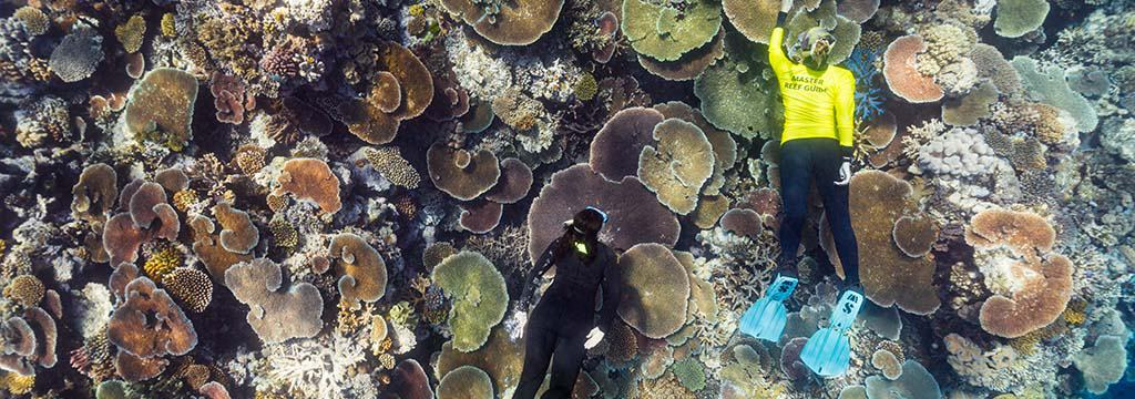 New Great Barrier Reef Expeditions October 2020