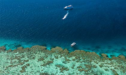 Coral Expeditions At The Reef
