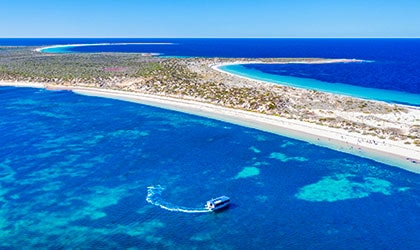 Reevesby-Island-South-Australia-Coral-Expeditions